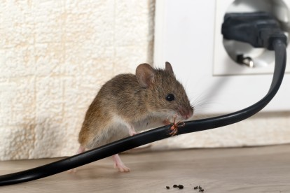 Pest Control in Raynes Park, South Wimbledon, SW20. Call Now! 020 8166 9746