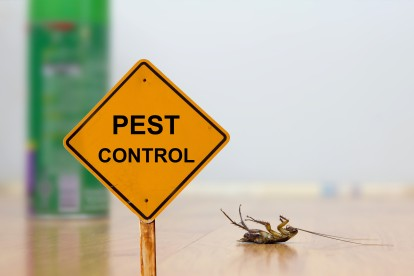 Pest Contol in Raynes Park, South Wimbledon, SW20. Call Now 020 8166 9746
