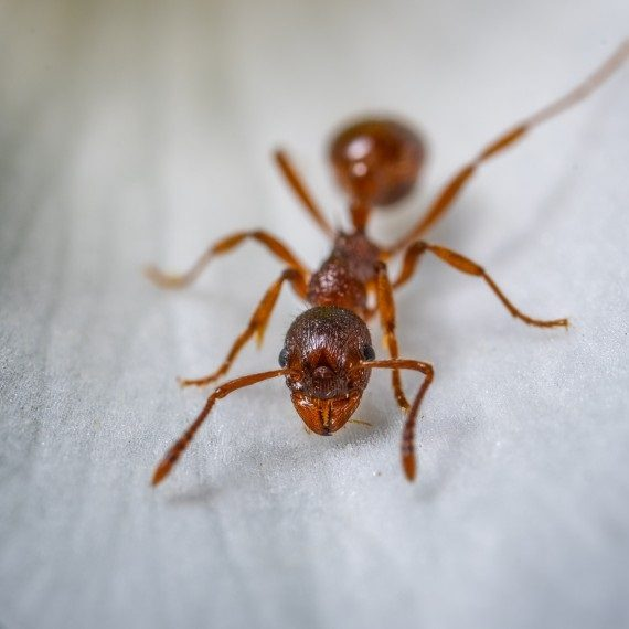 Field Ants, Pest Control in Raynes Park, South Wimbledon, SW20. Call Now! 020 8166 9746