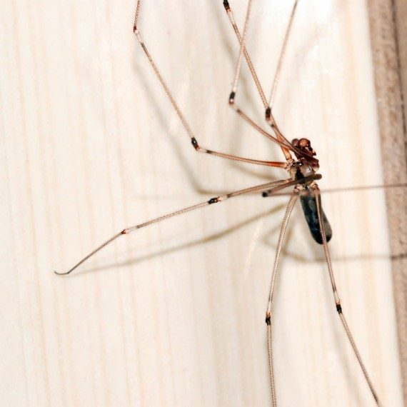 Spiders, Pest Control in Raynes Park, South Wimbledon, SW20. Call Now! 020 8166 9746
